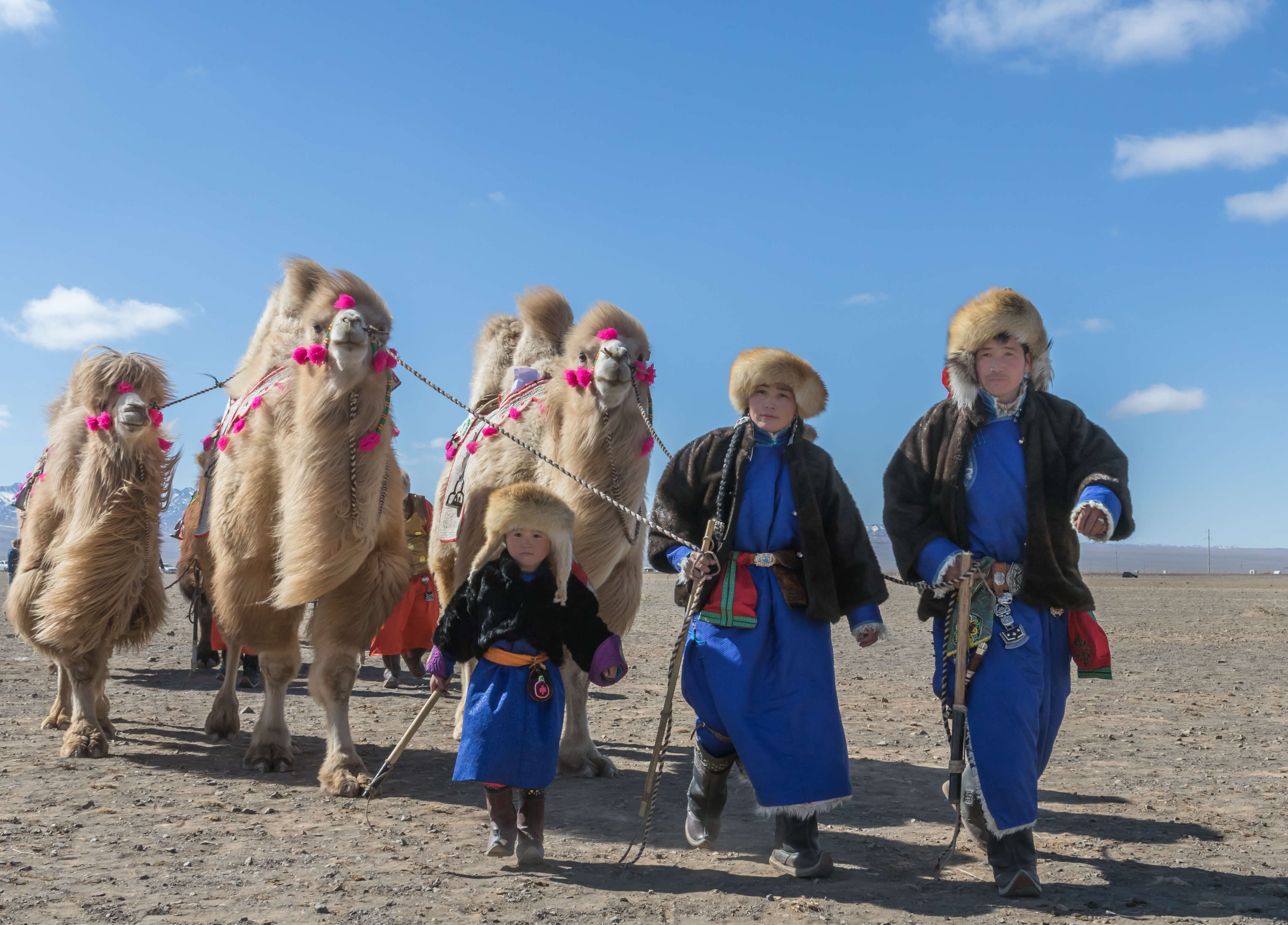 Camel riding in Mongolia